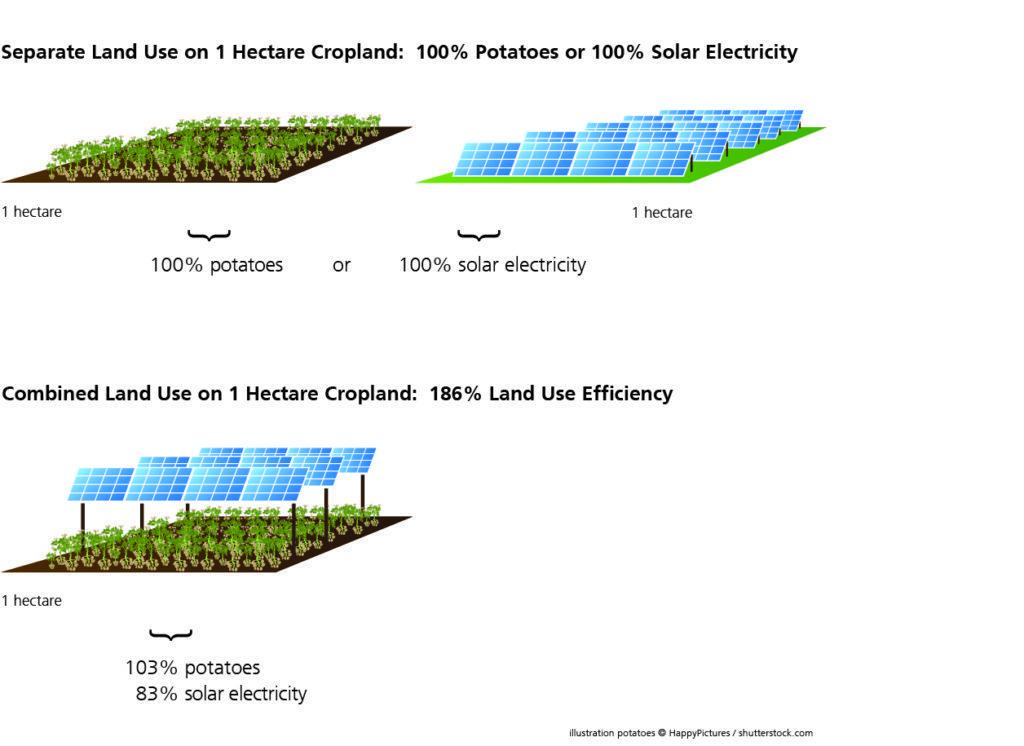 الفرق بين استثمار الأرضي للزراعة وتركيب الألواح الكهروضوئية في وقت واحد وبشكل منفصل