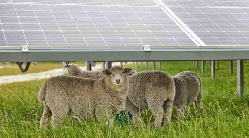 تور بلانش للزراعة الكهروضوئية